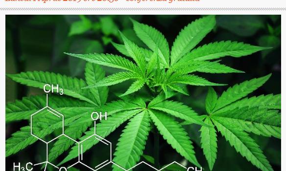 La cannabis ad uso terapeutico